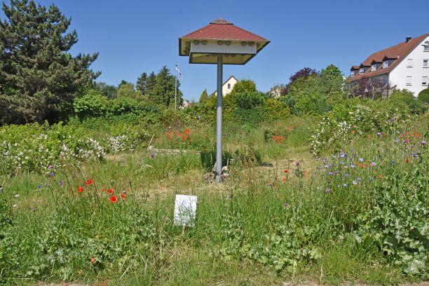 Die Insektenwiese von BUND und Imkerverein in Wiesbaden-Kloppenheim in voller Blüte. Infotafeln am viel frequentierten Spazier- und Radweg geben Tipps für den insektenfreundlichen Garten.